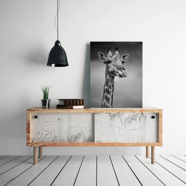 Fine Art Wildlife Canvas Prints Flash That Studio